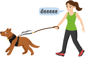 woman training with a dog and the traindee elastic leash
