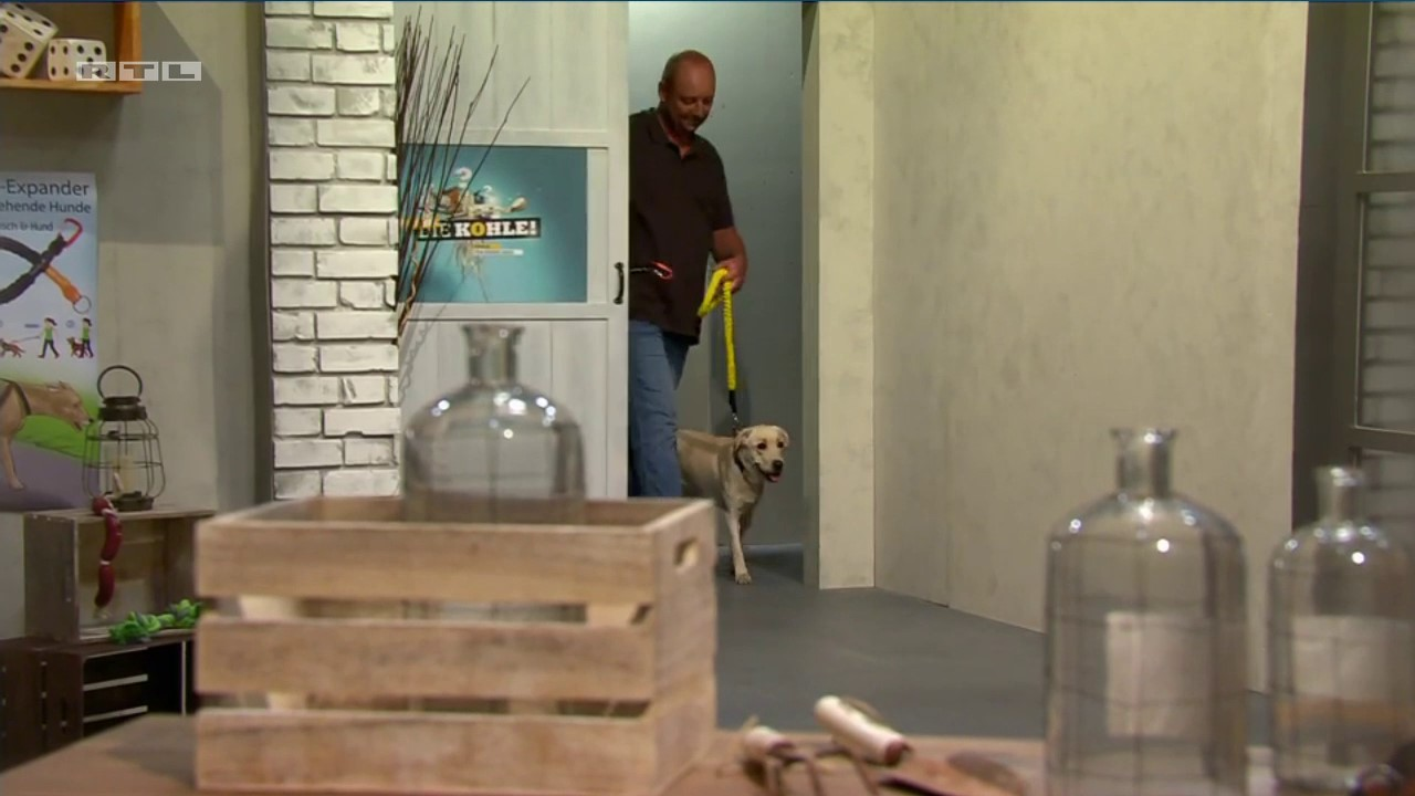 dog is pulling on yellow leash when man entering the tv studio for show